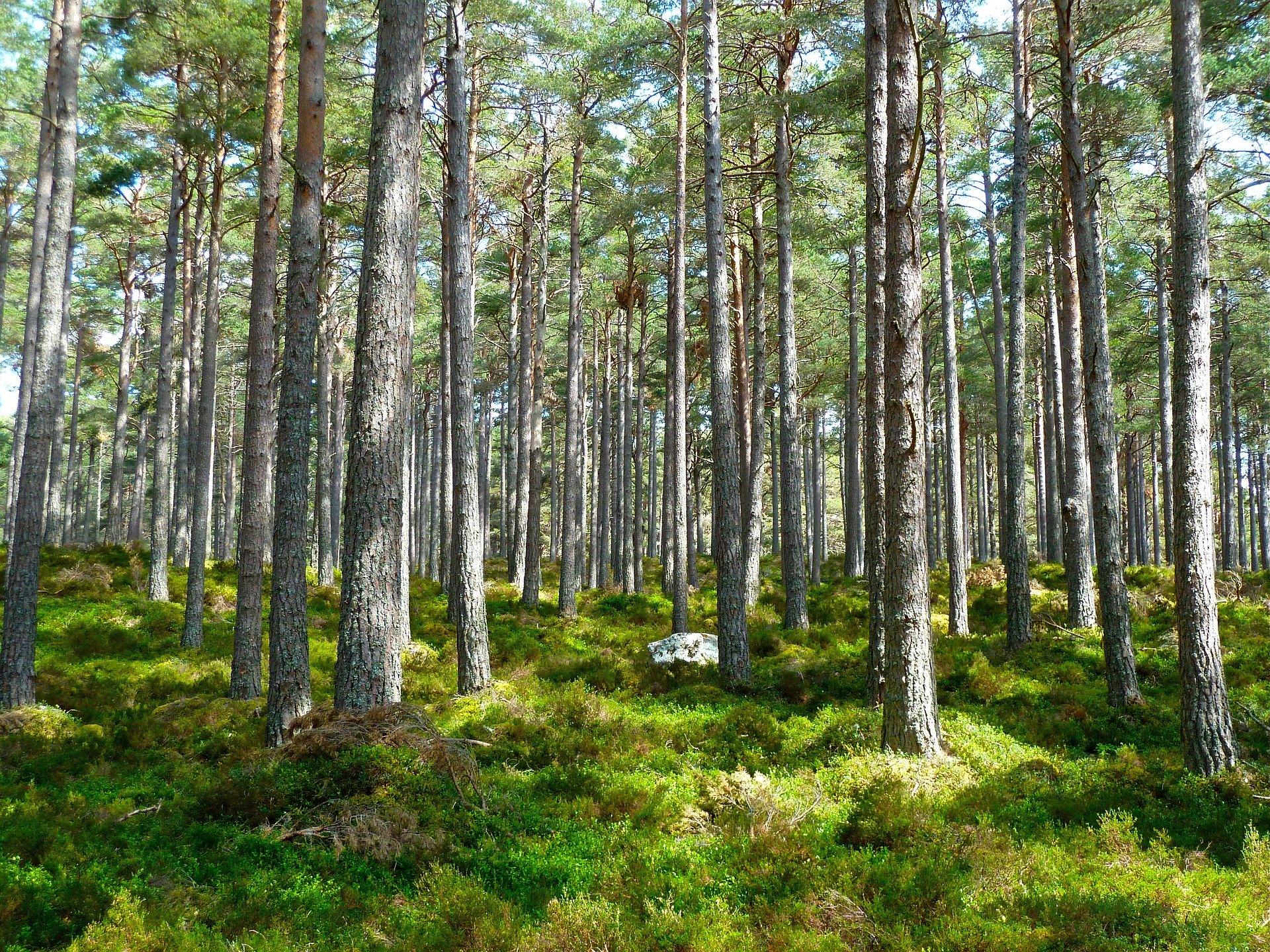 journee-mondiale-environnement-biodiversite